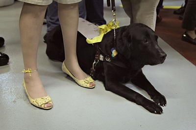 This is a close-up of my feet in the yellow peep toe pumps showing my painted nails and added bling to the shoes. It also is a close-up of my Freedom Guide Dog Toga. She also has her nails painted, wearing a yellow bow and displaying a sign that reads walk a mile in her shoes.